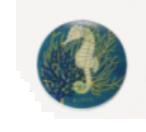 seahorsesdad
